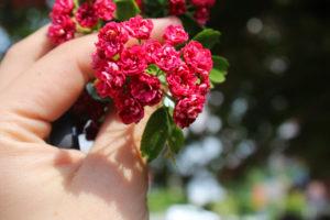 kwiatki-bochnia